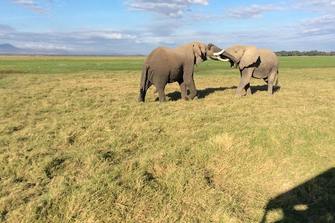 8 days kenya highlights safari ,Maasai Mara ,Amboseli , Tsavo East & Tsavo West