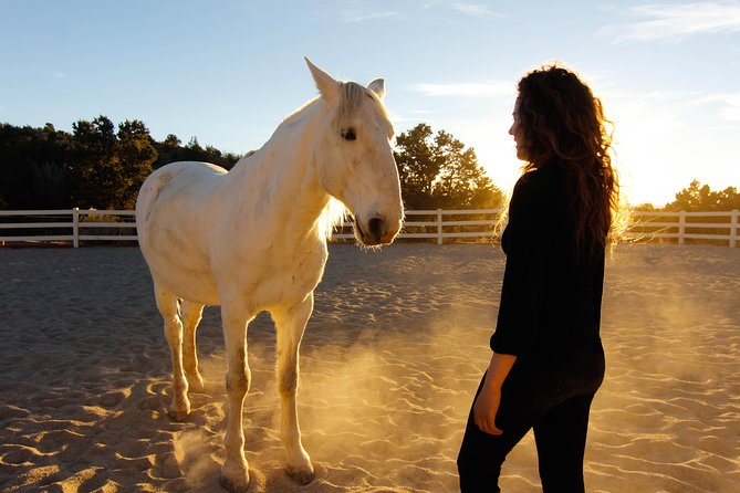 Learn how to 'horse whisper' and communicate and lead horses across distance