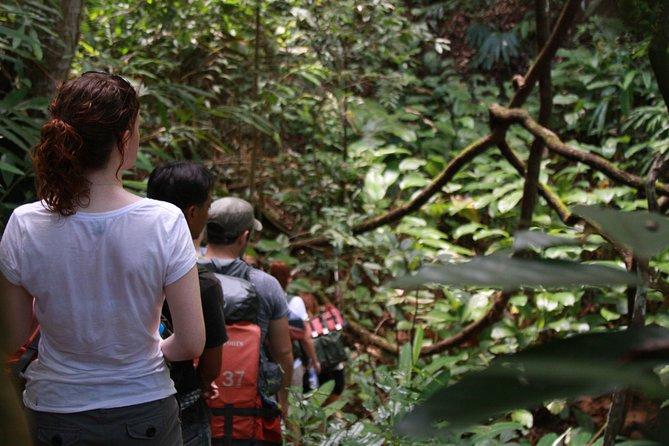Selva de 3 dias e 2 noites no Parque Nacional Huay Nam Dung