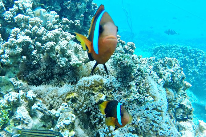 Let's go looking for an anemone fish house!