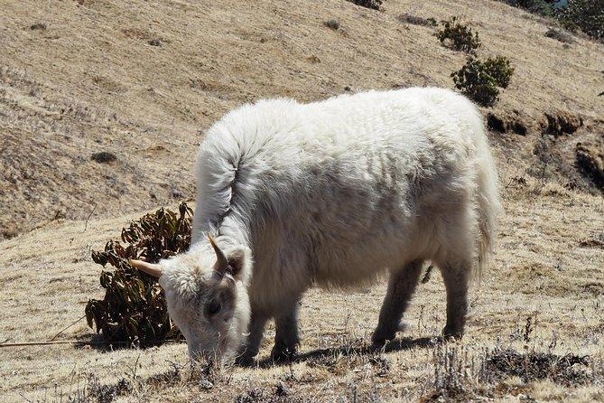 Pikey Peak Trek / Lower Solu Khumbu