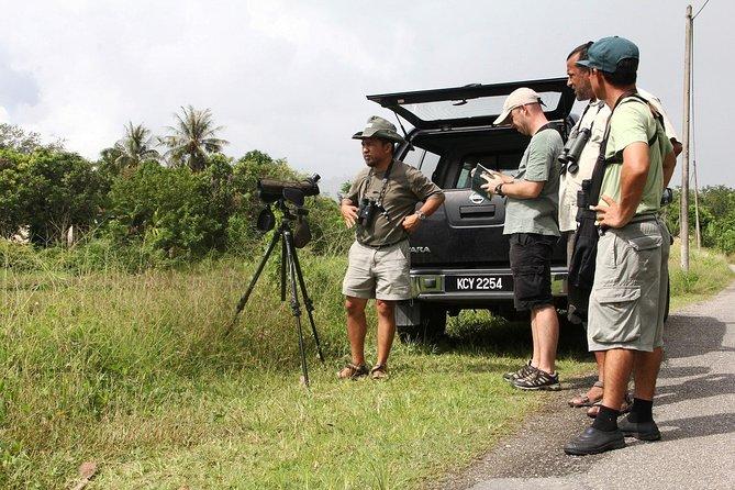 Birdwatching on Langkawi