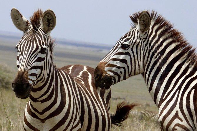 Wildlife Camping Safari, 3 Days, 2 Nights: Tarangire, Lake Manyara, Ngorongoro
