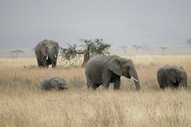 Wildlife Camping Safari: 5 Days, 4 Nights: Tarangire, Serengeti, Ngorongoro