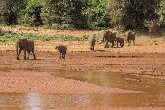 3 Day 2 Nights Maasai Mara Trip