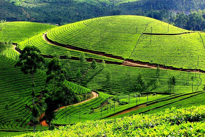 4 Days Kerala Tour