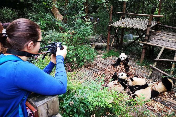 Chengdu Giant Panda and City Culture Private Day Tour (No shopping steps)