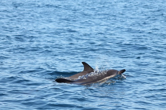 Dolphin Discovery photo 2