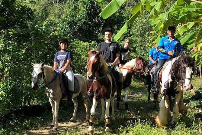 Horseback Riding 1 hour trail