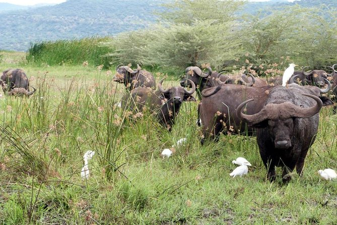 4 Days Private Camping In Serengeti Ngorongoro And Manyara photo 1
