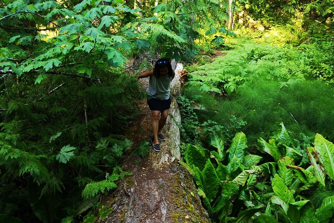 Vancouver Island Rainforest Guided Hike with Private Guide