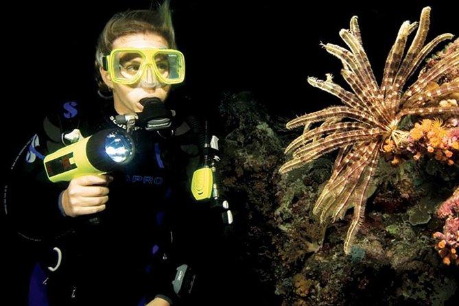 Night Shore Diving Mangel Halto Aruba
