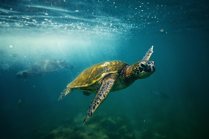 Kahului Shore Excursion: Snorkeling Adventure