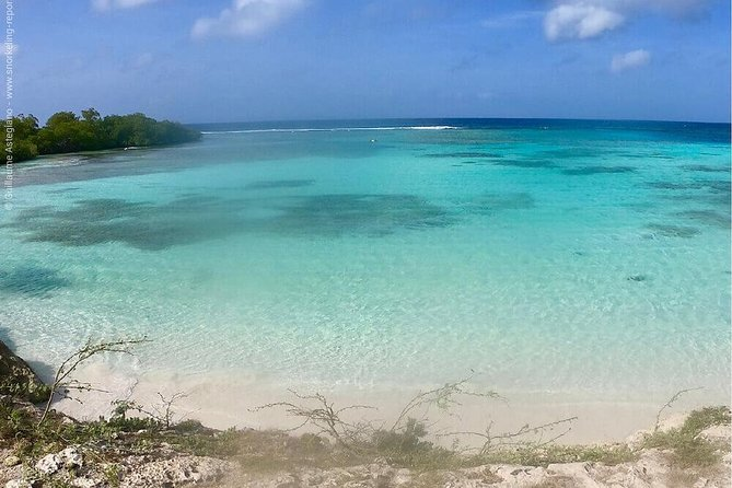 Discover Snorkeling Mangel Halto Aruba