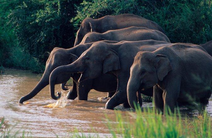 Wasgamuwa National Park Safari from Kandy