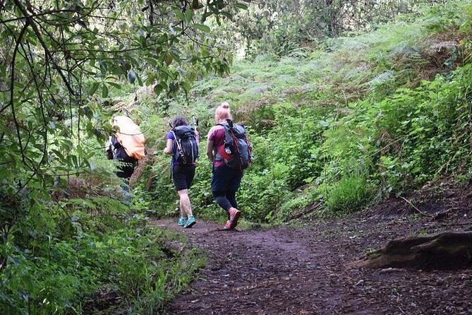 8 Days itinerary Kilimanjaro trek - Lemosho route photo 7