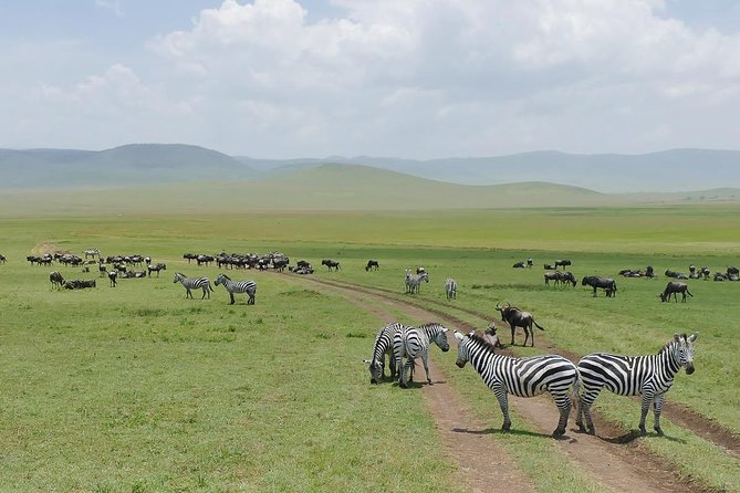 3 Days Join Group Trip To Tarangire , Manyara And Ngorongoro