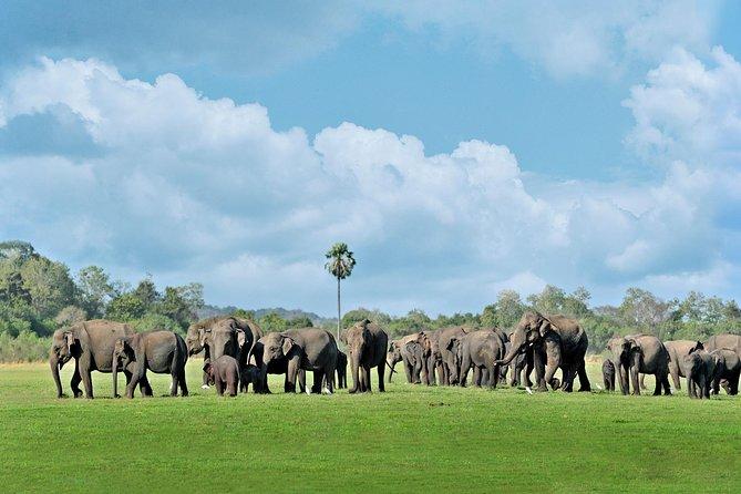 Minneriya National Park Safari from Polonnaruwa