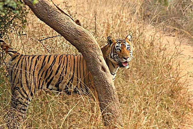 6 Nights & 7 Days Golden Triangle with Ranthambore National Park