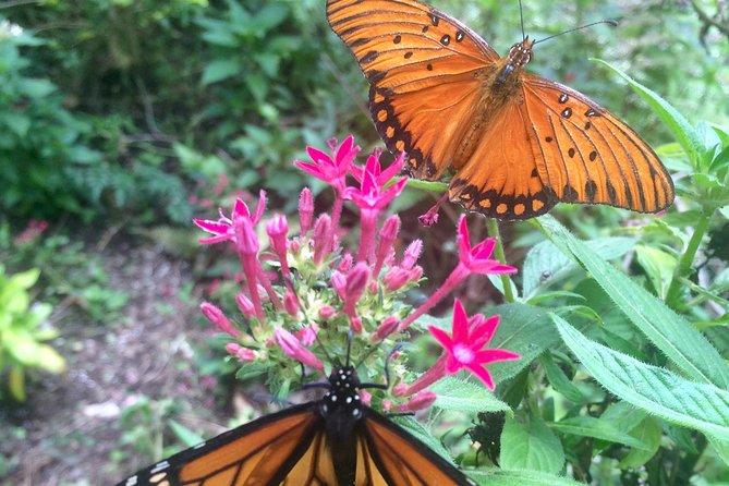 Hawaiian Butterfly Farm Tour!