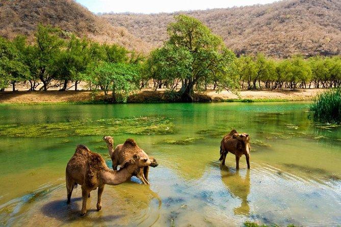 11 Days Tour Muscat and Salalah
