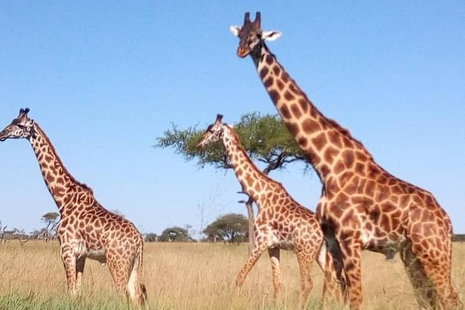 3 Days Join Group Trip To Serengeti And Ngorongoro photo 9