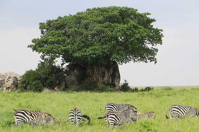 3 Days Join Group Trip To Serengeti And Ngorongoro photo 11