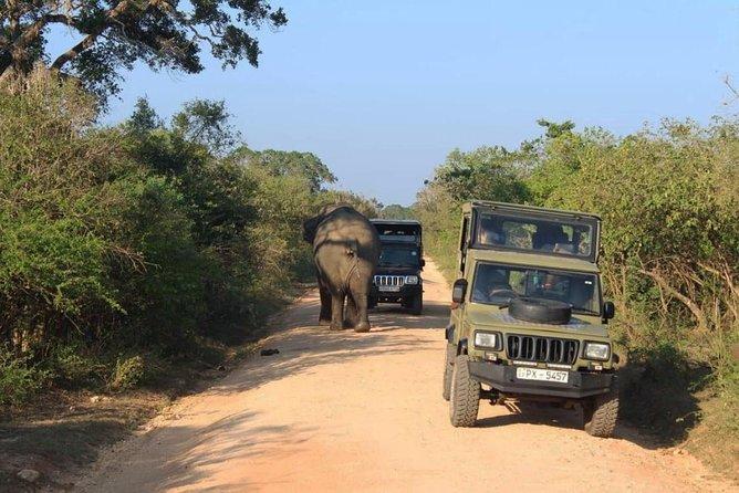 One Day Udawalawe Safari from Galle/Mirissa/Unawatuna/Hikkaduwa