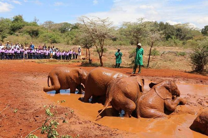 Full day tour including National park,shedrick,giraffe center and bomas of Kenya photo 2