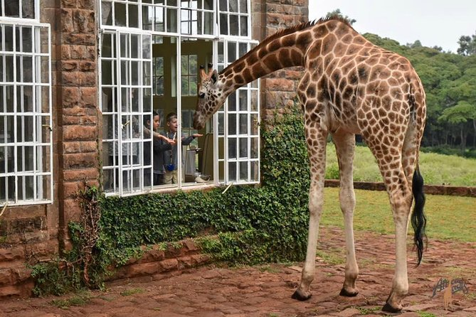 Best of Nairobi including Giraffe center,Shed rick,souvenir shop and bomas photo 7