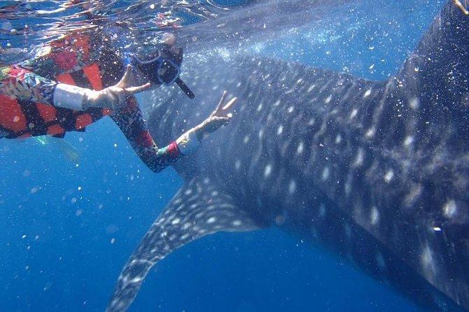 Cebu Whaleshark Journeys