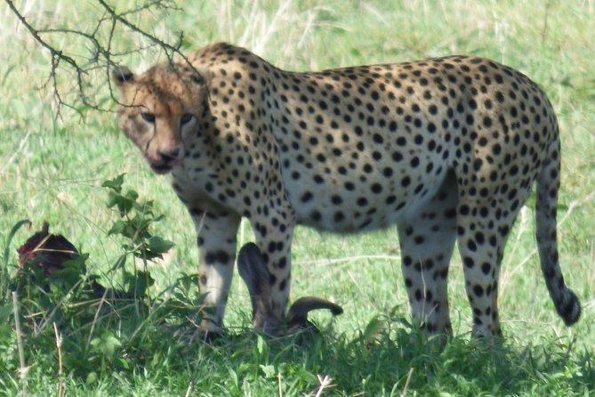 Wildlife Camping Safari: 2 Days, 1 Night - Manyara, Tarangire National Parks