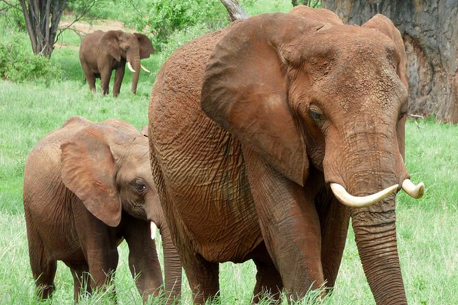 Camping Safari, 6 Days, 5 Nights: Tarangire, Serengeti, Ngorongoro, Lake Manyara