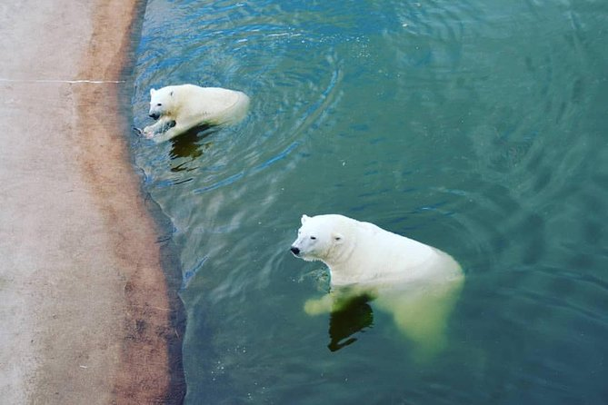 ZOO Ranua tour from Rovaniemi by Lux car with Private guide