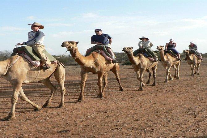 Camel Riding Marsa Alam Day Tour
