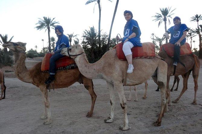 Marrakech Palmeraie 1-Hour Camel Ride