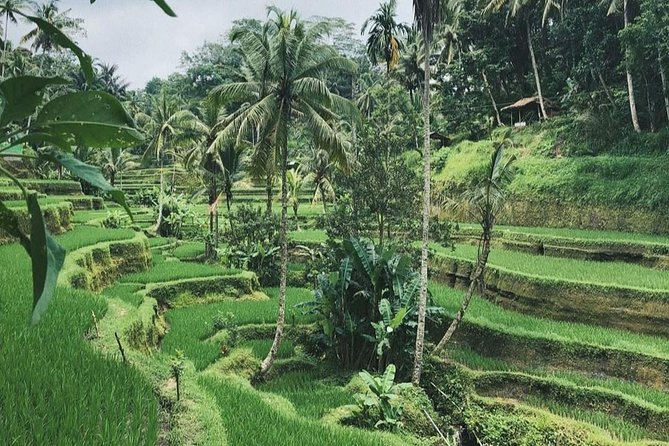 Ubud Surrounding Private Bali Tour