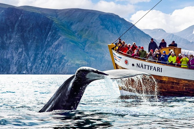 Whale Watching Tour on a Traditional Oak Ship from Husavik