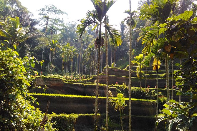 Happiness tours in bali
