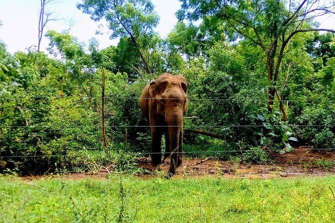 Udawalawe National Park Amazing Safari Tour - Wild Elephants Sighting Guaranteed