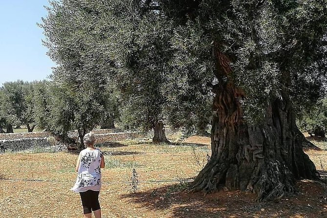 Walking tour in centuries-old olive grove in Ostuni