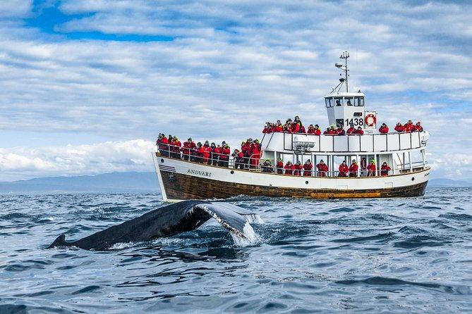 Original Carbon Neutral Whale Watching Tour from Húsavík
