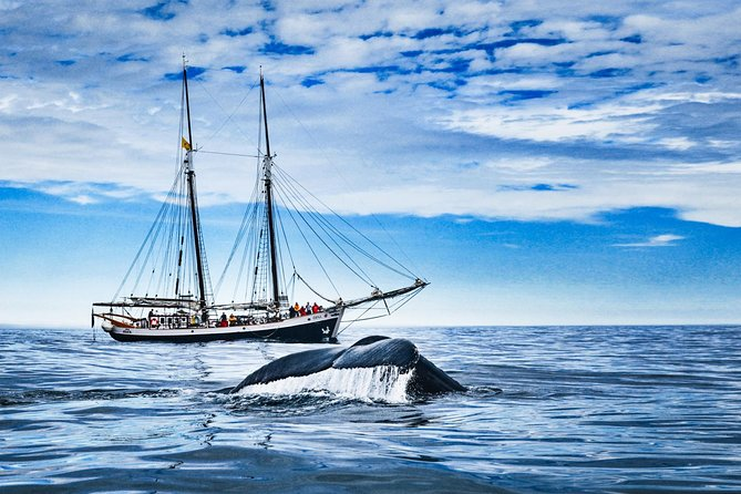 Original Carbon Neutral Whale Watching Tour from Húsavík