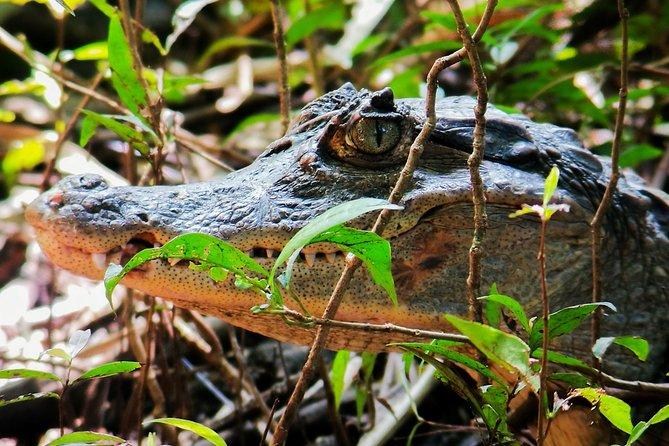 Manuel Antonio National Park Tour
