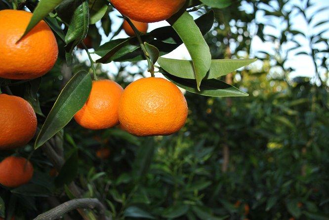 Mandarina Tour
