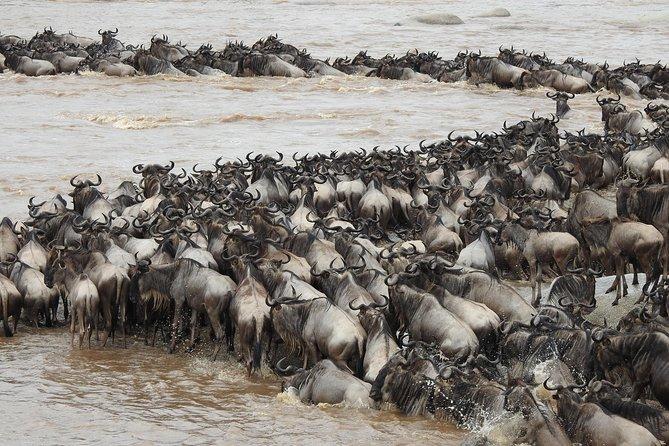 African Migration Safari - 10 days