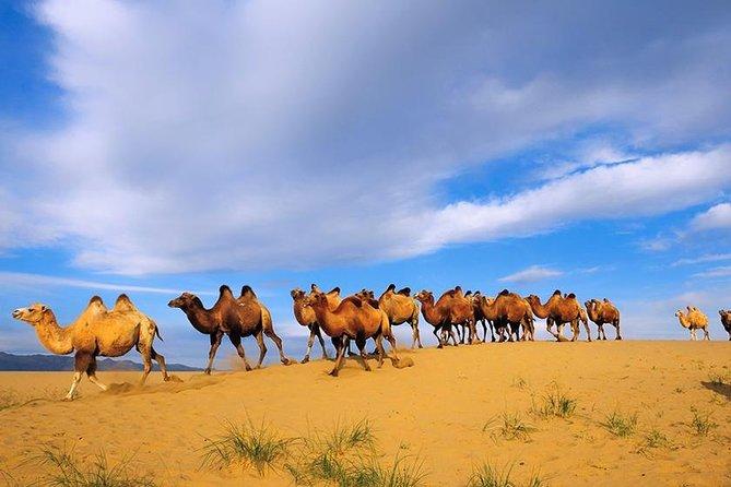 Agadir Souss Massa Park National Visit
