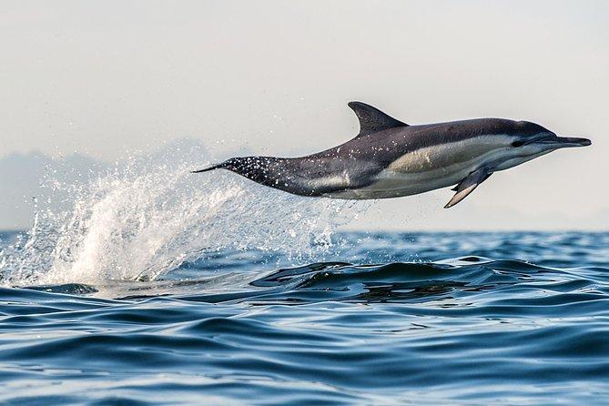 Half Day Dolphin & Wildlife Cruise - Tauranga
