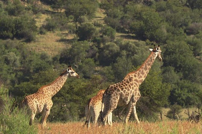 3 Days Selous Game Reserve Safari, Tanzania photo 2