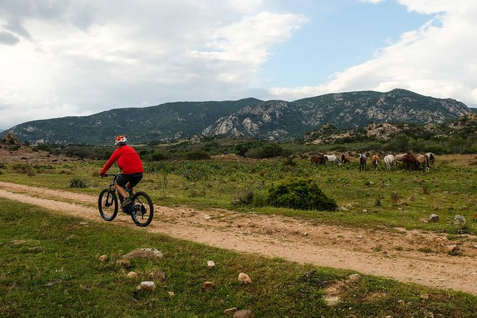 From the hills to Oasi Biderosa & Capo Comino with Electric Mountain Bikes photo 4